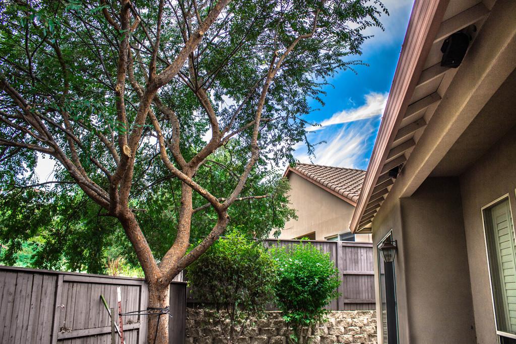 Arborist El Dorado Hills - After